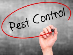 Exterminators - Pest Control San Antonio